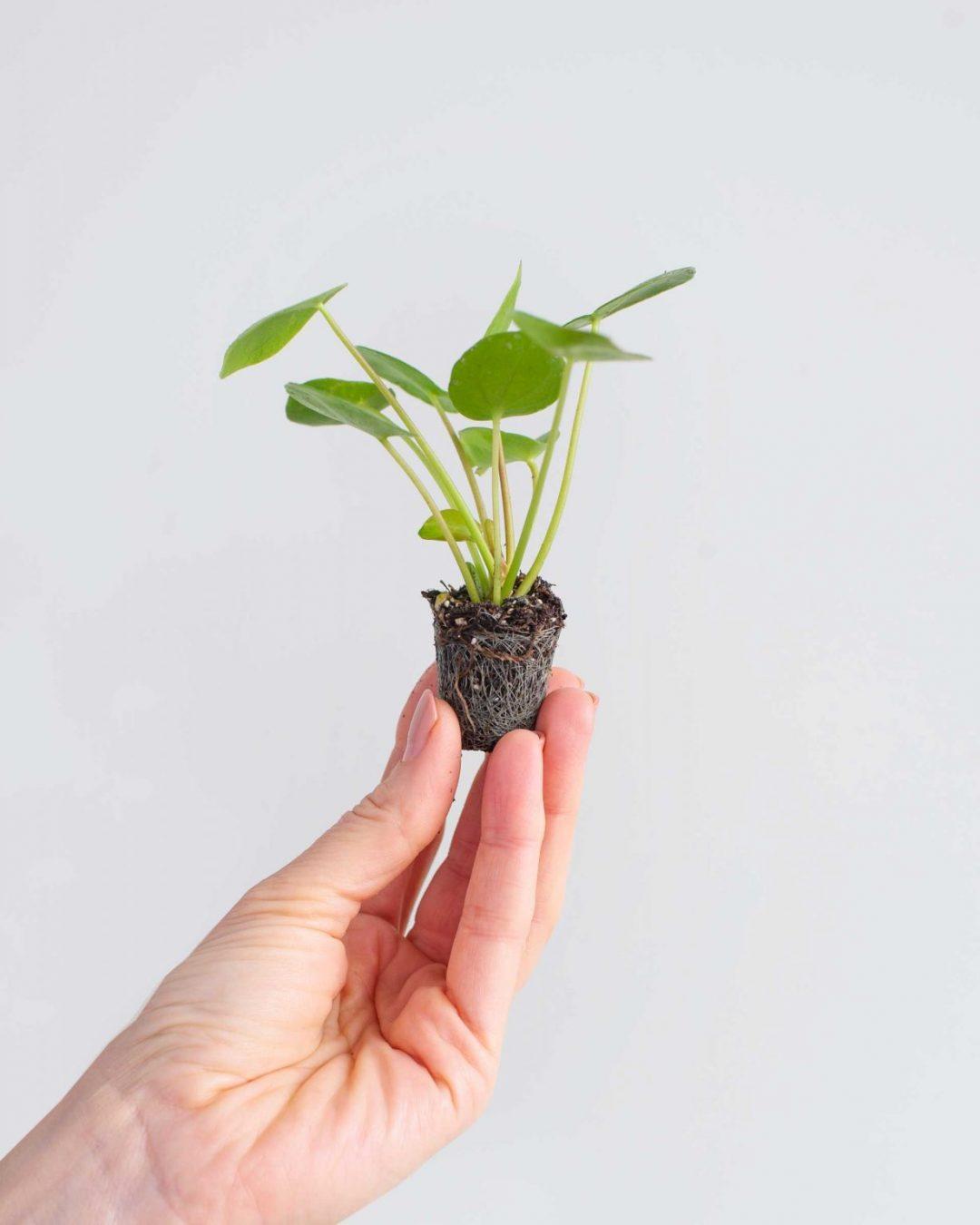 baby-plants-15