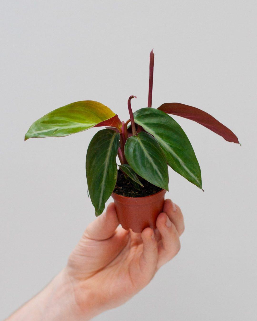 baby-plants-2-1