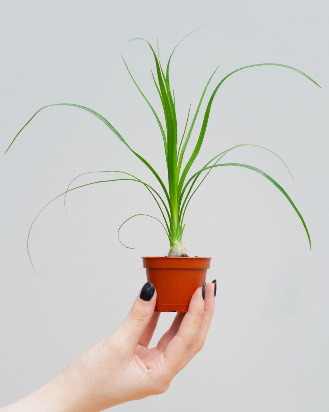 baby-plants-3