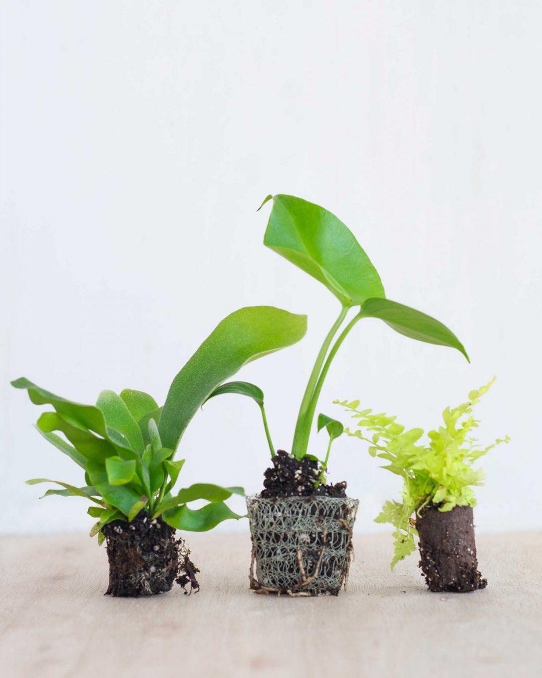 baby-plants-6