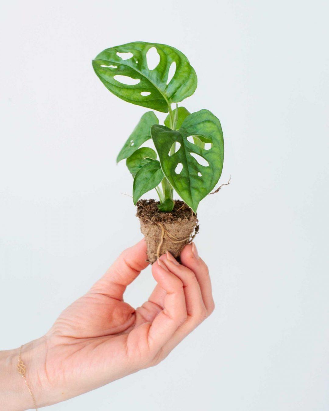 baby-plants-9
