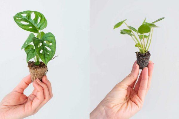 Jeste li već vidjeli ove preslatke minijaturne biljke? Mi smo se raspametili