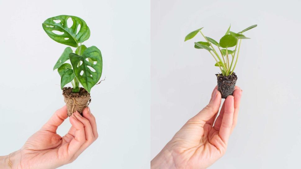minijaturne biljke naslovna
