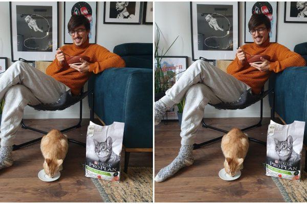 """Poznati ljubitelji mačaka podržali su kampanju pod nazivom """"Dom je tamo gdje je mačka"""""""