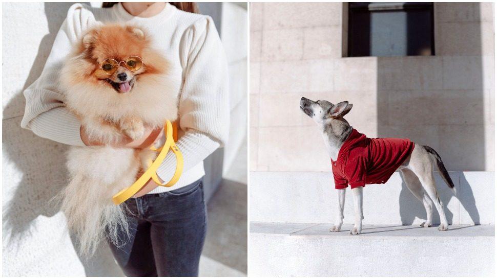 Journal Pets: Plišane jaknice za pse omiljenog hrvatskog brenda su must-have za zimu