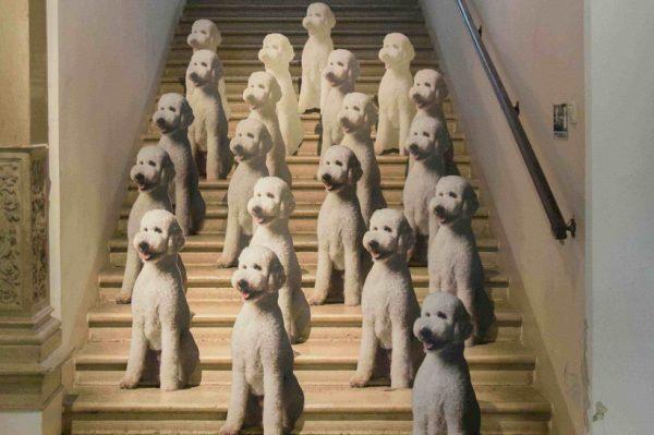 Top Dog / Underdog prostorna je instalacija vizualne umjetnice Pauline Jazvić u MUO