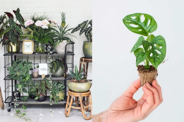 Ovog Božića poklonite biljke – donosimo inspiraciju