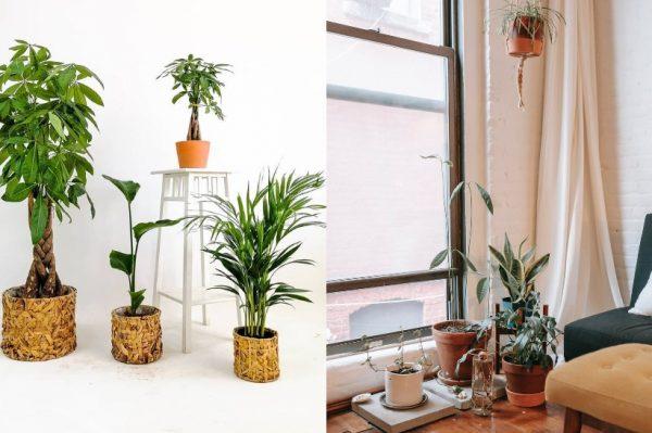 Za ove biljke se vjeruje da donose sreću, mir i blagostanje
