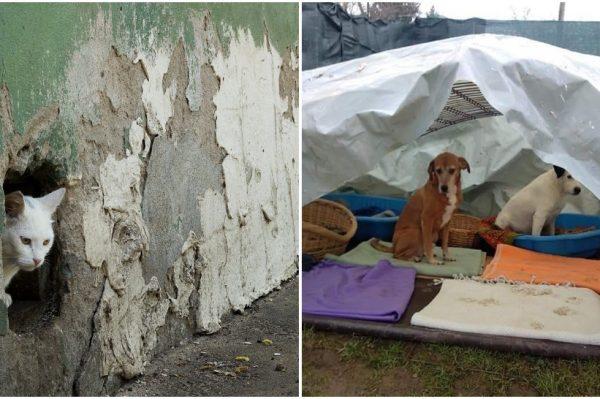 Prijatelji životinja redovito ažuriraju sve podatke vezane za životinje s područja pogođenih potresom