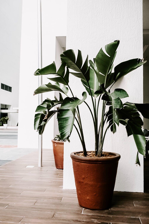 biljke-7