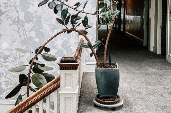 Ovo je pet najpopularnijih biljaka na Instagramu ovih dana