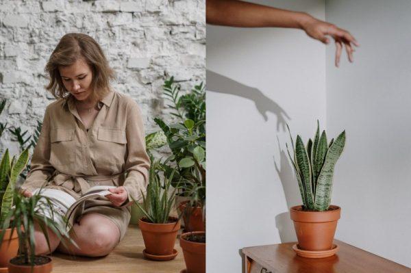 Pet pravila za njegu biljaka zimi