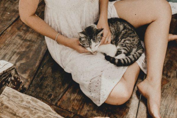 Sve što morate znati ako planirate udomiti mačku
