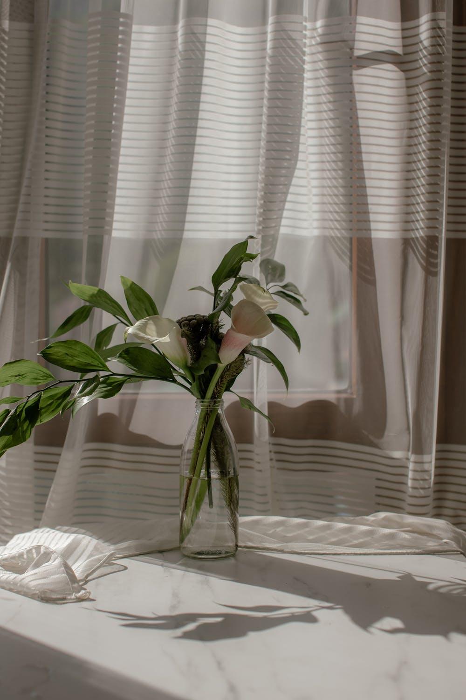 cvijeće_dom