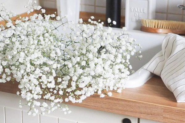 Uz gipsofile svaki će cvjetni aranžman izgledati predivno