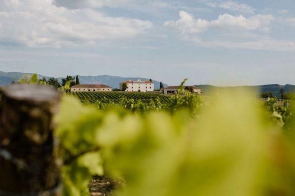 Spektakularni dvorac okružen vinogradima jedan je od najljepših skrivenih bisera Istre