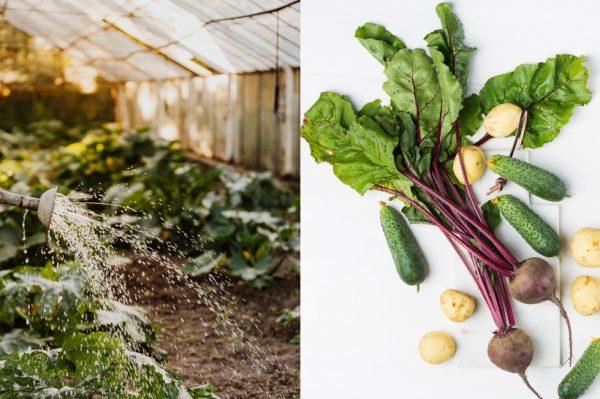 Gruntek: Unajmite vrt u kojem će stručnjaci za vas uzgajati eko povrće
