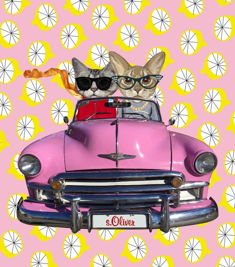 Mačke-su-se-vratile-u-grad_1