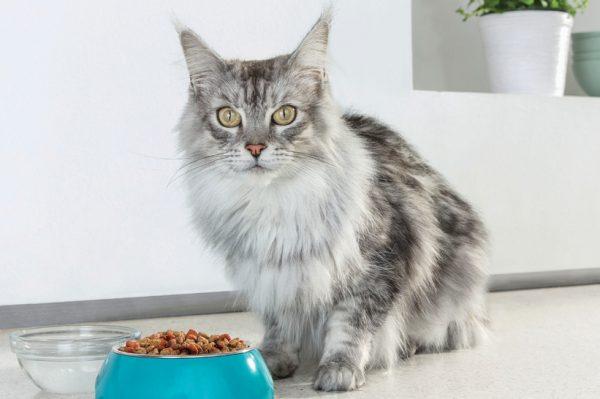 Nova hrana za mace koja sadrži jedan top sastojak za jačanje imuniteta