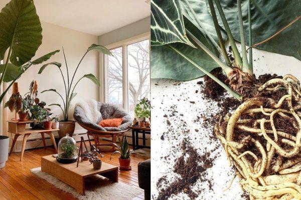 Vrijeme je za proljetno presađivanje biljaka, donosimo sve što trebate znati