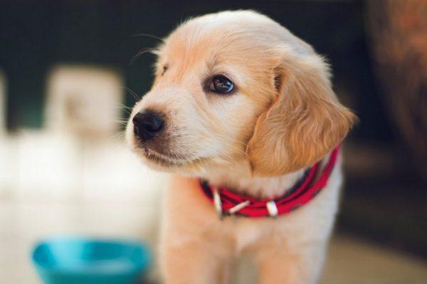 Nabavljanje štenca najbolja je odluka koja će vam zauvijek promijeniti život