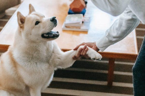 Zašto je važno brinuti o odgoju svog psa?