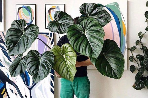 Journal Man: Kućne biljke koje će i potpuni početnici bez problema održati na životu