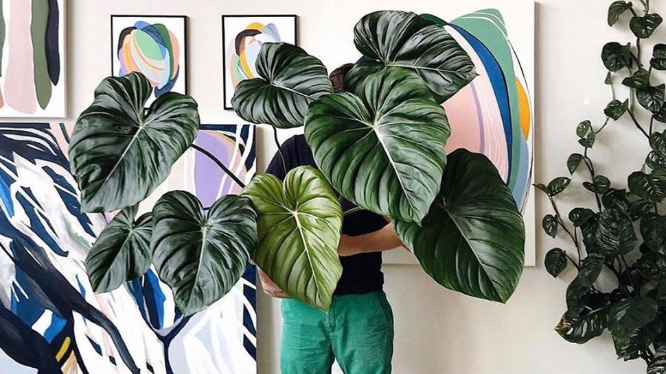 kućne biljke za početnike slider