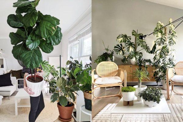 Super vijest: Zagrebački vrtni centar ovog vikenda ima odličan popust na sobne biljke!