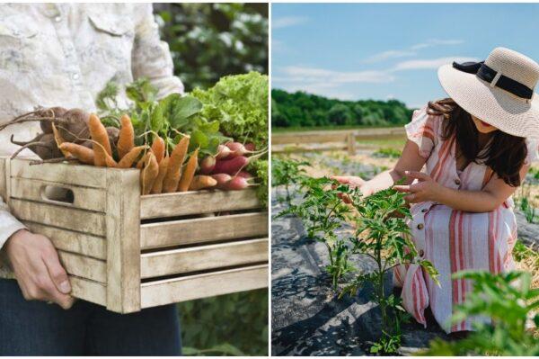 #allaboutchange: Uz Gruntek svatko od vas može imati svoj vrt s eko hranom