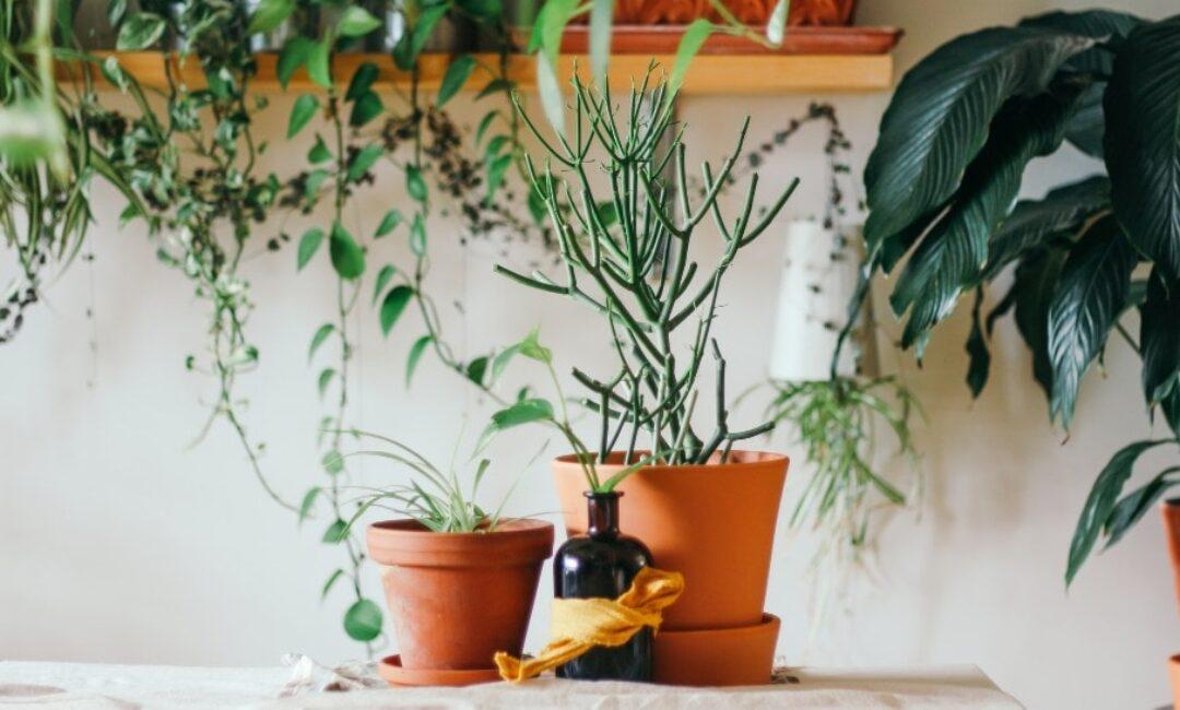 Uz ovih nekoliko savjeta biljke vam neće uvenuti dok ste na godišnjem