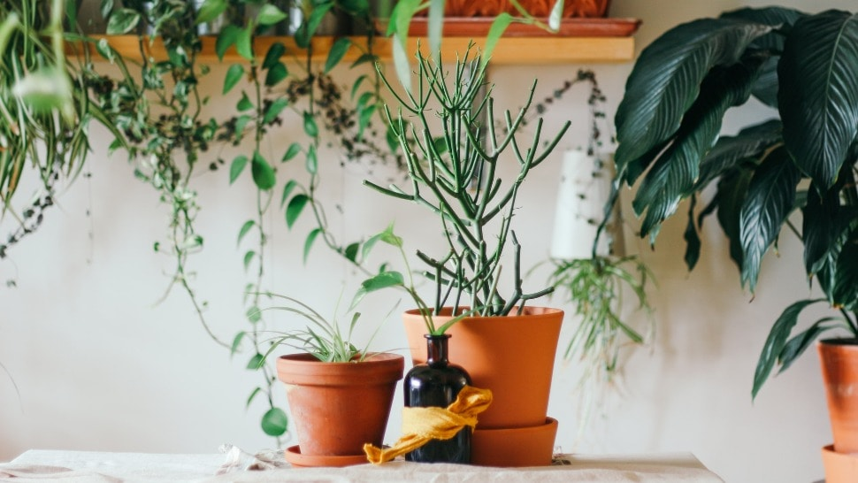 biljke naslovna