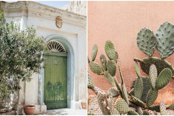 Ove mediteranske biljke jednostavno obožavamo