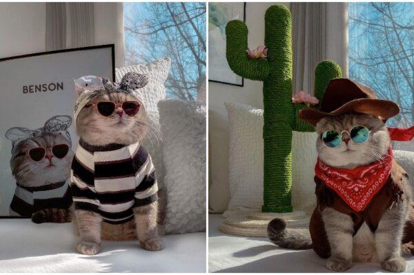 Journal Pets: Upoznajte Bensona – mačka sa stilom koji će vam uljepšati dan