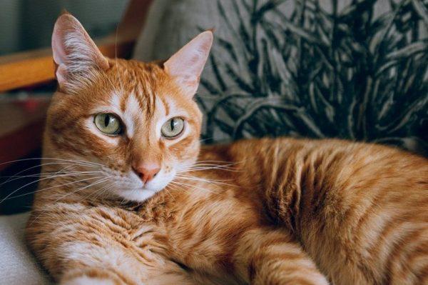 Journal Pets: Koje su prednosti sterilizacije za život vaše mačke?